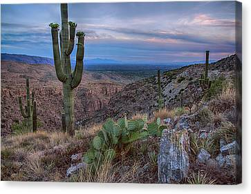 Catalina Mountains Color Sunset Canvas Print by Dave Dilli