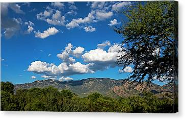 Canvas Print featuring the photograph Catalina Mountains H48 by Mark Myhaver