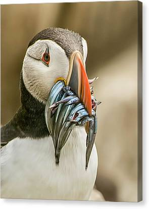 Catch Of The Day Canvas Print by Brian Tarr