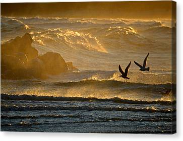 Sesuit Harbor Canvas Print - Catch Of The Day - Cape Cod Bay by Dianne Cowen