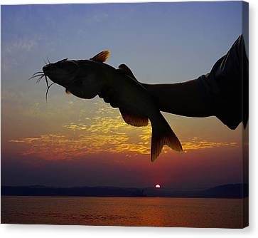 Catfish At Sunrise Canvas Print by Ron Kruger
