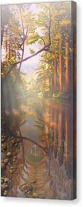 Cathedral Redwoods Canvas Print