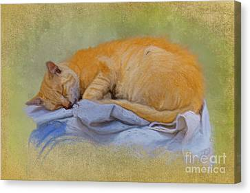 Forty Winks Canvas Print by Gillian Singleton