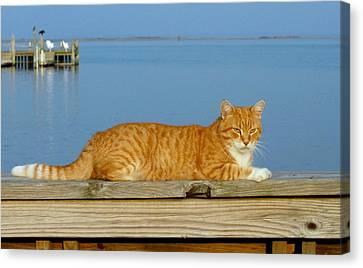 Cats 29 Canvas Print by Joyce StJames