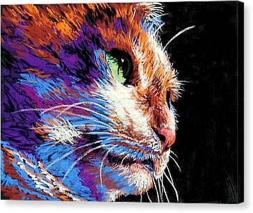 Cat's Eye Canvas Print by Lynee Sapere