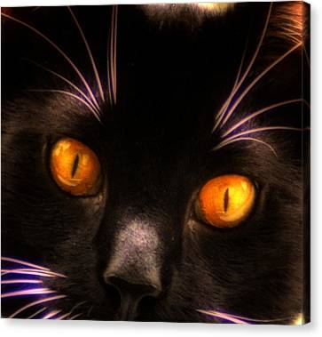 Cats Eyes Canvas Print by Bill Cannon