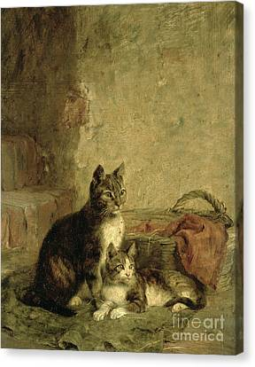 Small Basket Canvas Print - Cats by Julius Adam