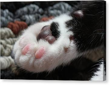 Canvas Print featuring the photograph Cats Paw by Kim Henderson