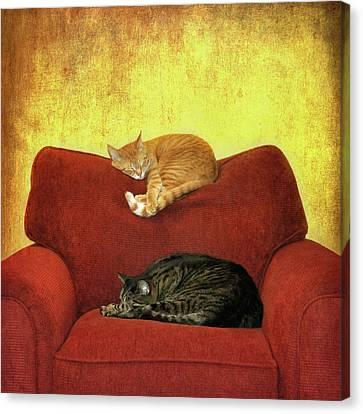 Cats Sleeping On Sofa Canvas Print by Nancy J. Koch, Pittsburgh, PA