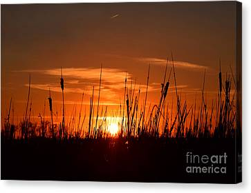 Cattails And Twilight Canvas Print