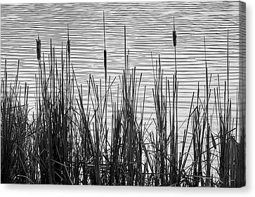 Cattails In A Minnesota Marsh Canvas Print by Jim Hughes
