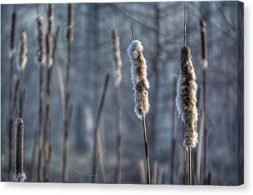 Canvas Print featuring the photograph Cattails In The Winter by Sumoflam Photography