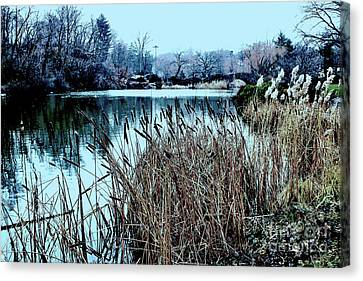 Cattails On The Water Canvas Print by Sandy Moulder