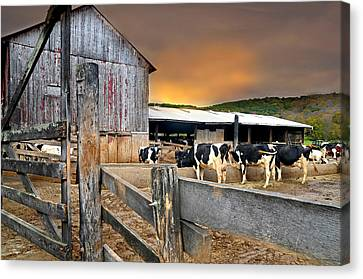 Litchfield County Canvas Print - Cattle Barn by Diana Angstadt