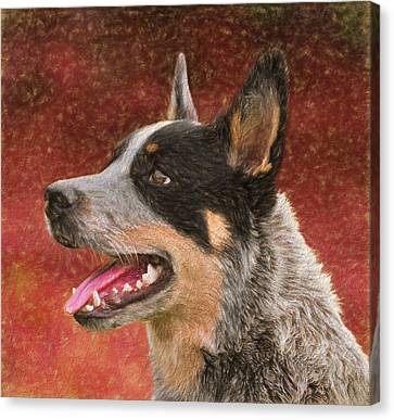 Cattle Dog On Red Canvas Print by Dan Sproul