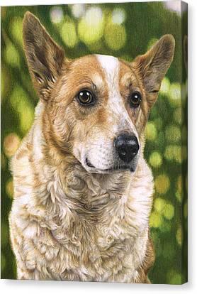 Cattle Dog Portrait Canvas Print by Karen Broemmelsick