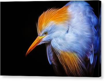 Cattle Egret Electrified Canvas Print by David Gn