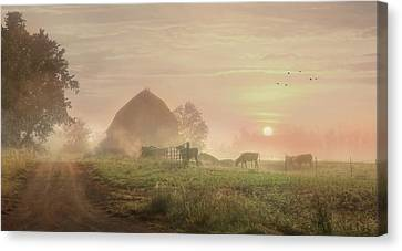 Cattle In The Mist Canvas Print