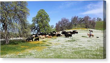 Cattle N Flowers Canvas Print by Diane Bohna