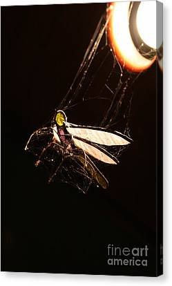 Orb Canvas Print - Caught Prey by Jorgo Photography - Wall Art Gallery