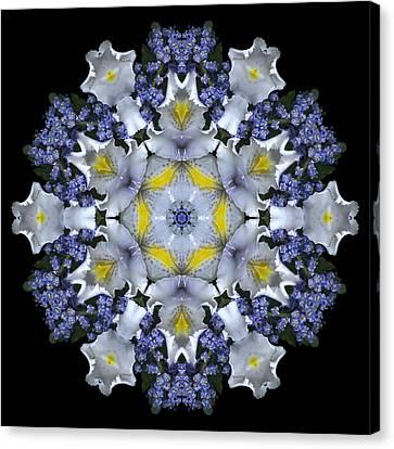 Ceanothus Iris Medley 1 Canvas Print