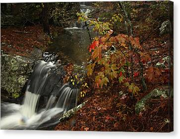 Cecil Cove Runoff Canvas Print by Michael Dougherty