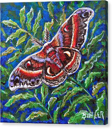 Cecropia Moth Canvas Print by Gail Butler