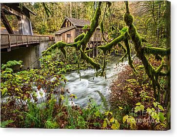 Cedar Creek Mill Mosses Canvas Print