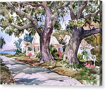 Cedar Key Survivors Canvas Print by Tony Van Hasselt