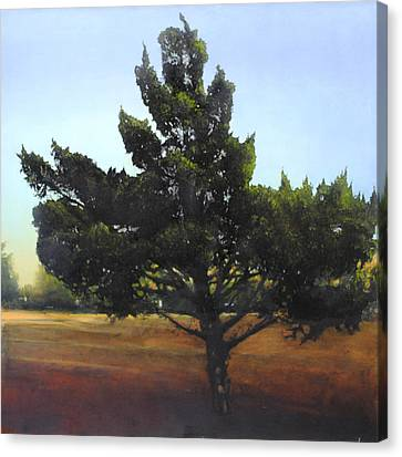 Cedar Sold Canvas Print by Cap Pannell