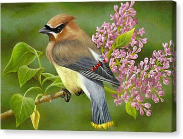 Cedar Waxwing On Lilac Canvas Print by Karen Coombes