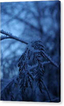 Cedars Of Ice II Canvas Print