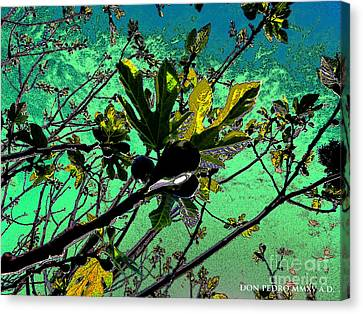 Figtree Canvas Print - Celebrating The Spring 2 by Don Pedro De Gracia