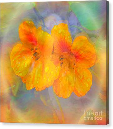 Celebration Of Life. Canvas Print
