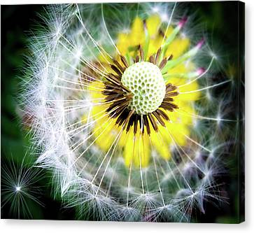 Celebration Of Nature Canvas Print by Karen Wiles