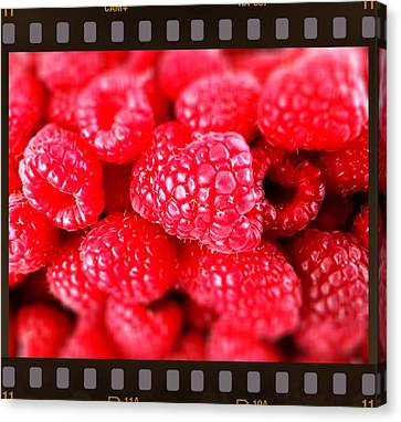 Celebrity Berries Canvas Print by Cadence Spalding