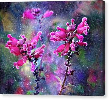 Celestial Blooms-2 Canvas Print by Kathy M Krause