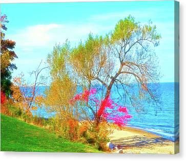 Sunshine Canvas Print - Celestial Skies Beach Tree by Aimee L Maher Photography and Art Visit ALMGallerydotcom