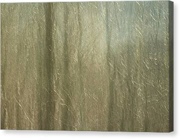 Celophane Canvas Print
