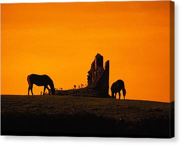 Celtic Horses At Sunset Canvas Print by Carl Purcell