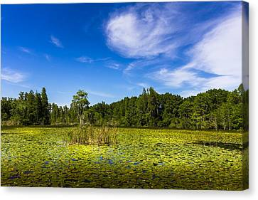 Center Cypress Canvas Print by Marvin Spates