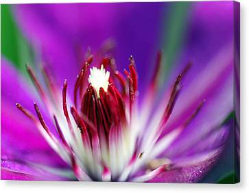 All Your Vision Canvas Print - Center Of Attention  by Don  Wright