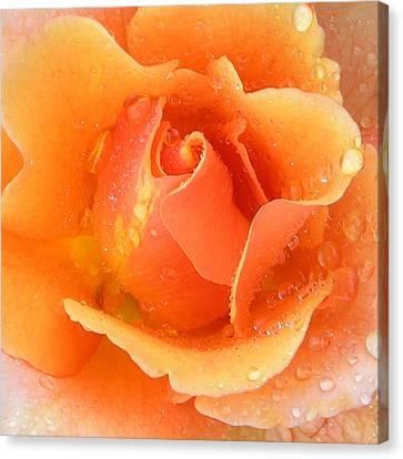 Center Of Orange Rose Canvas Print by John Lautermilch