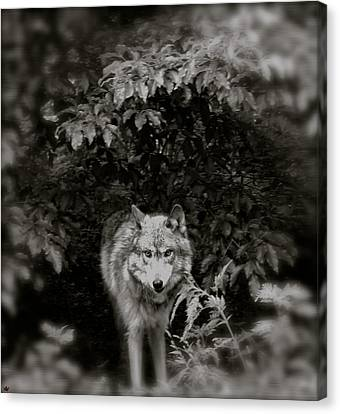 Center Of The Forest Canvas Print by Debra     Vatalaro