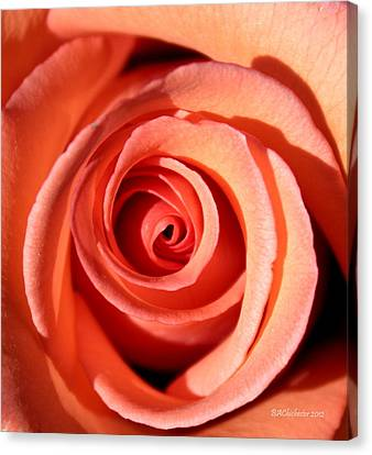 Canvas Print featuring the photograph Center Of The Peach Rose by Barbara Chichester
