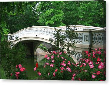 Central Park Bow Bridge In Spring Canvas Print by Christopher Kirby