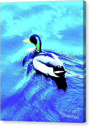 Central Park Duck In Boat Pond 20a Canvas Print by Ken Lerner