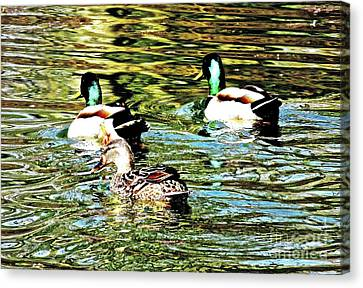 Central Park -- Ducks In The Boat Pond 1a Canvas Print by Ken Lerner