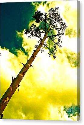 Century Plant Seed Stalk Canvas Print by Chuck Taylor