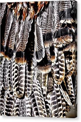 Ceremonial Feathers Canvas Print by Ann Powell